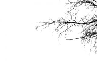 ZHAN ZHUANG  |   l'arbre